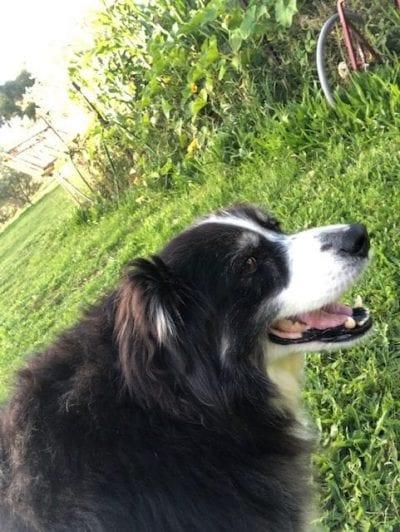Badger looking happy in a very green, overflowing garden